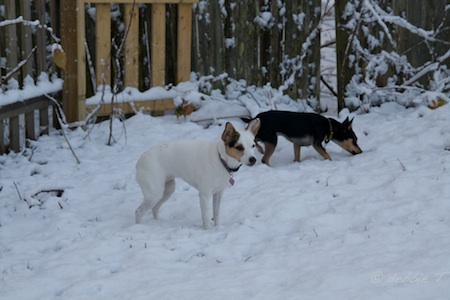 Mindy & Lexi - first snow of the season